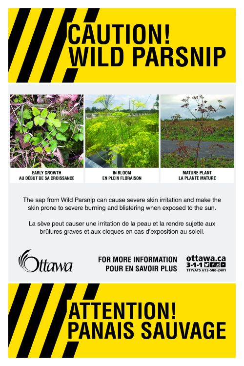 Wild Parsnip Caution Sign
